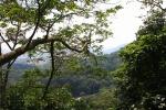 FRIM Natuurpark, Maleisië