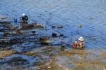 Op zoek naar schelpdieren in Dapeng, China