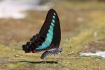Vlinders, Yangshuo, China