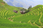 Longji Rice Terraces, Longsheng