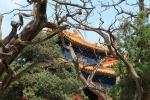 Confuciustempel Beijing