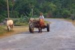 Ossenkar, Cuba