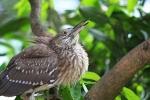 Vogelpark, Kuala Lumpur, Maleisië